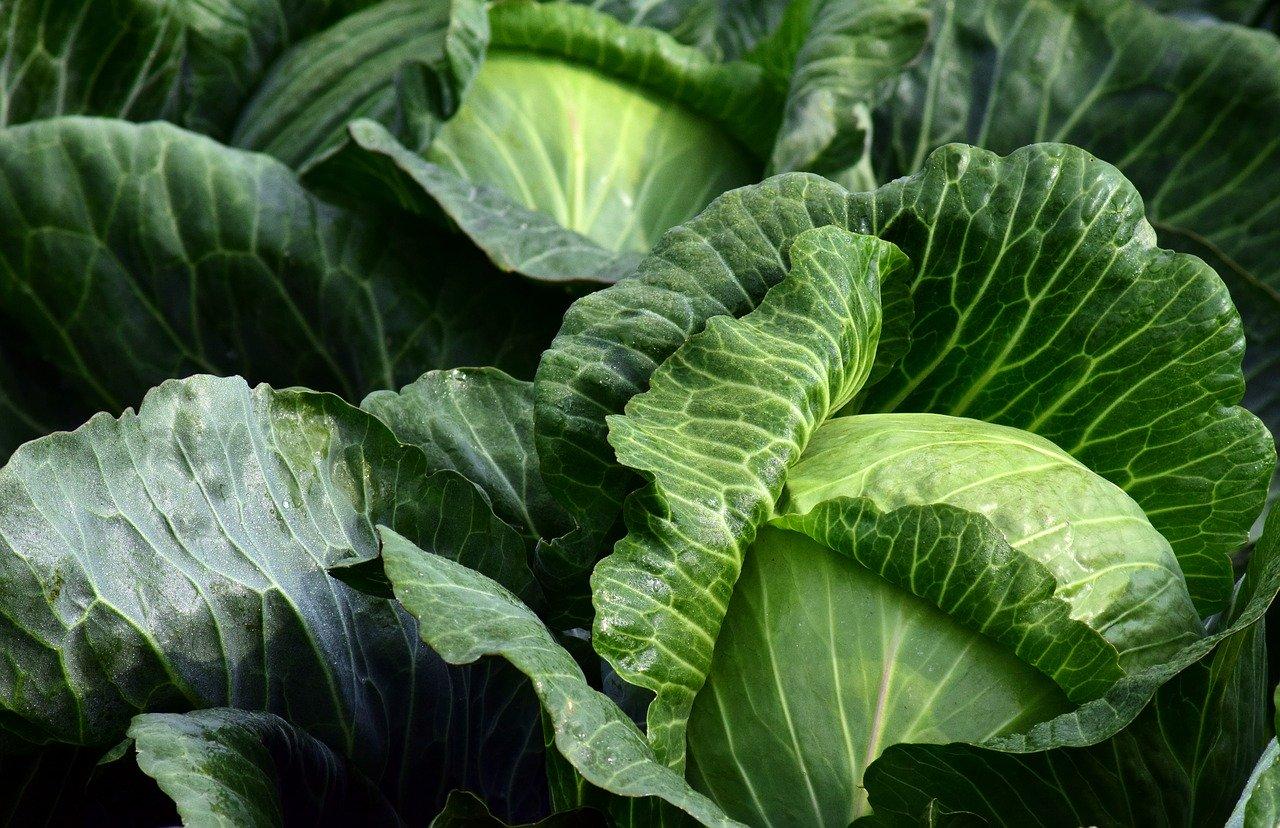 Des astuces pour trouver des fruits et légumes frais